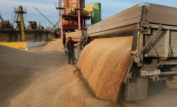 Экспорт зерна превышает прошлогодний уровень на 24,5%