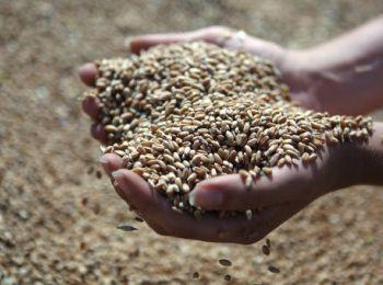 ГПЗКУ объявила осеннюю программу закупок зерна