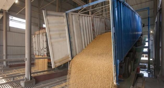 Экспорт зерна уступает прошлогоднему объему на 15%
